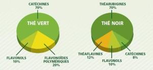 Polyphénols du thé vert et noir - camemberts