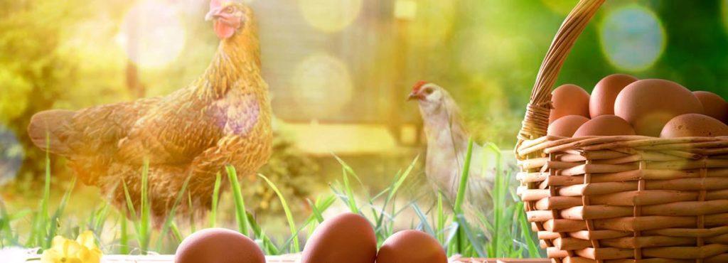 Unilever-manger-engaments-nutrionnels-plan-mode-vie-durable